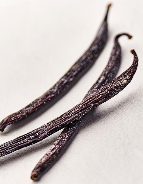 vanille planifolia givree
